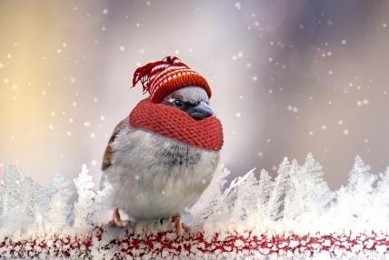 bird frío big