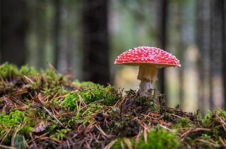 Bosque amanita biodiversidad bg